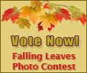 Vote Now for the Falling Leaves Quilt Show Photo Contest