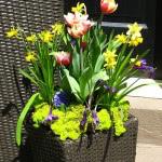 tulip-fest-2008-3