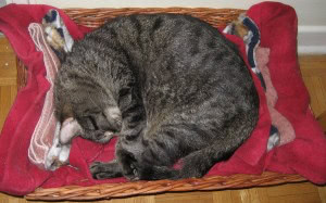 daniel-sleeping-basket
