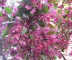 spring-flowers-1