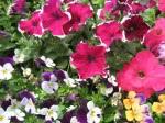 spring-flowers-10