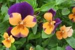 spring-flowers-11