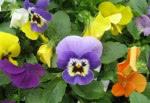 spring-flowers-13