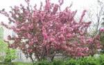 spring-flowers-16