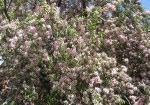 spring-flowers-18