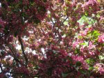 spring-flowers-2