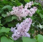 spring-flowers-4