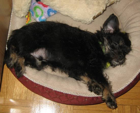 Milo-sleeping