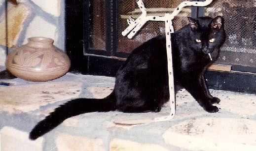 Casey Cat
