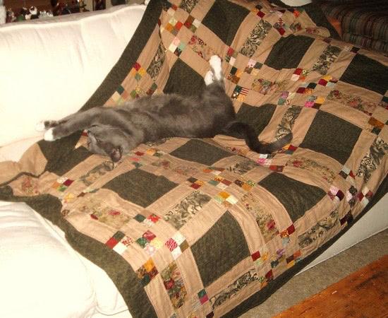 denny-cat